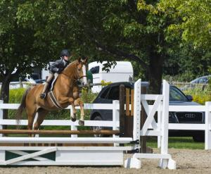 horse-show-photos -21 21004314278 o-min