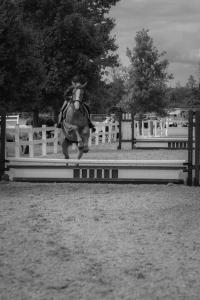 horse-show-photos -28 20569483254 o-min-min