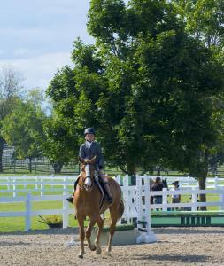 horse-show-photos -31 21004094320 o-min