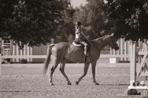horse-show-photos -33 20571077763 o-min
