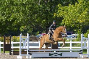 horse-show-photos -45 21165918916 o-min