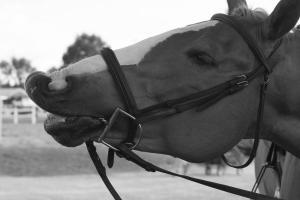 horse-show-photos -50 21004249498 o-min