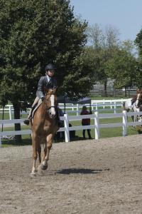 horse-show-photos  21165915866 o-min